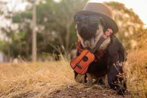 indie ukulele songs